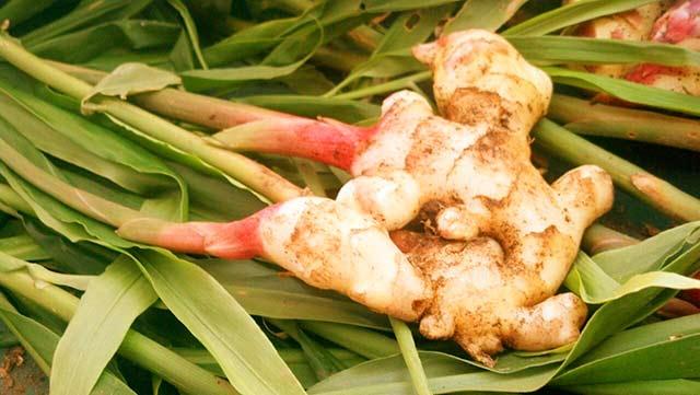 umbier-lekársky-zázvor-korenie Korenie na chudnutie: vyskúšajte silu korenia a jeho účinky