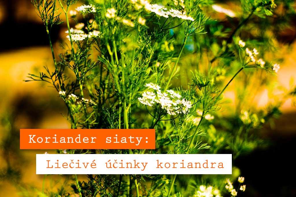 Koriander-siaty Cesnak ako liek, 7 účinkov cesnaku na zdravie (3. je naj)