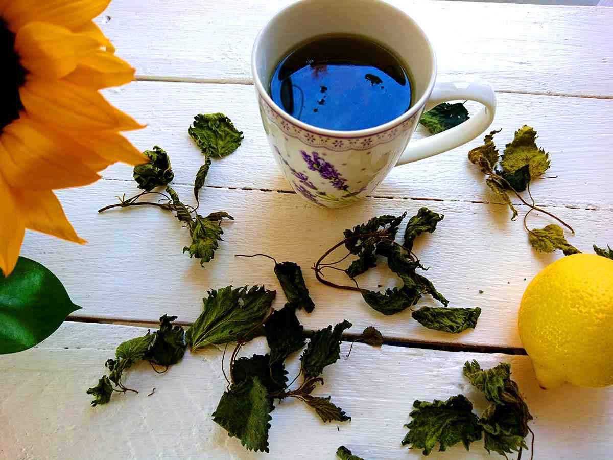žihľavový čaj