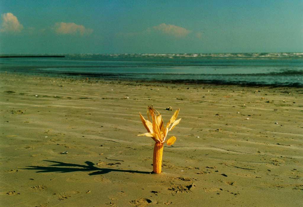 Kukurica na pláži