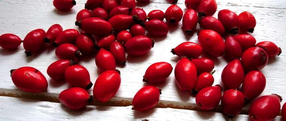 Plody šípok